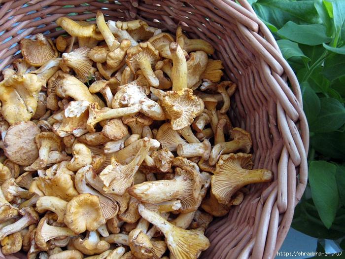 грибы лисички (2) (700x525, 389Kb)