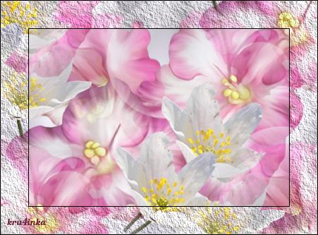 Розовая (450x333, 326Kb)
