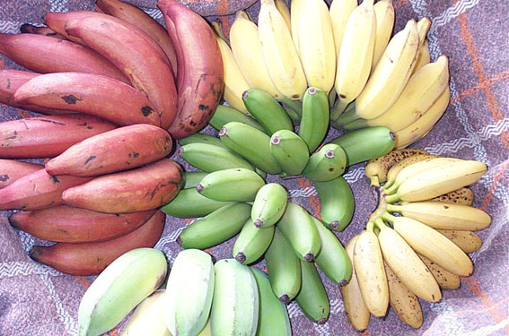 banana-variety (567x375, 78Kb)