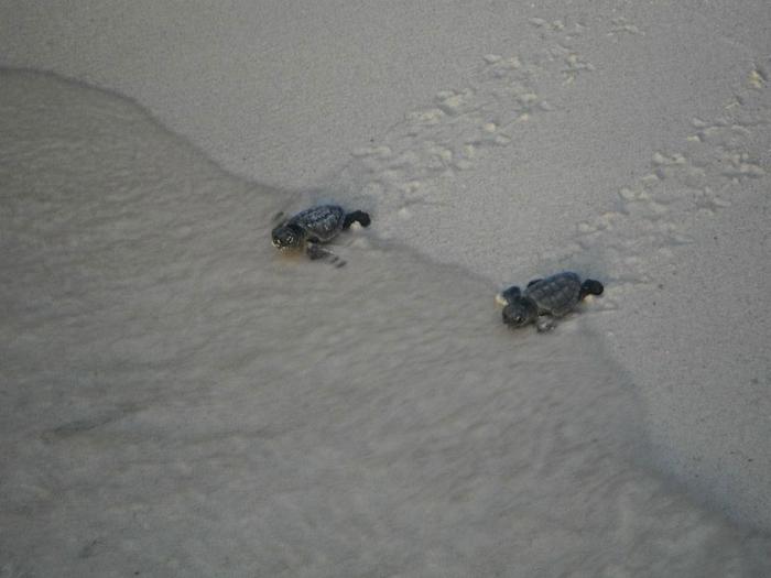 черепахи фото 7 (700x525, 183Kb)