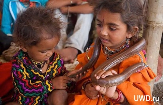 дети племени вади приручают змей (550x355, 145Kb)