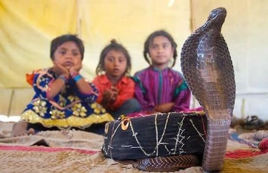 дети племени вади приручают змей 2 (550x355, 128Kb)