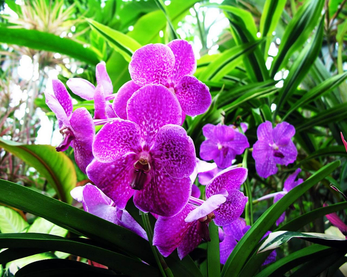 цветок 1 (700x560, 521Kb)
