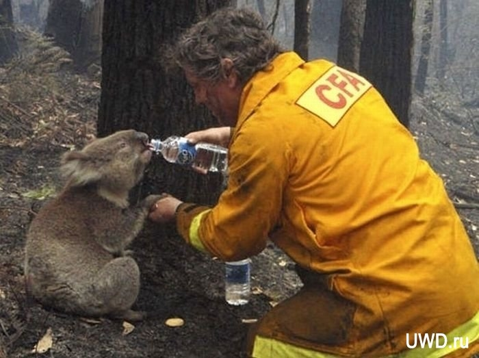1320049554_heartwarming_photos_of_animals_being_rescued_02 (700x523, 179Kb)