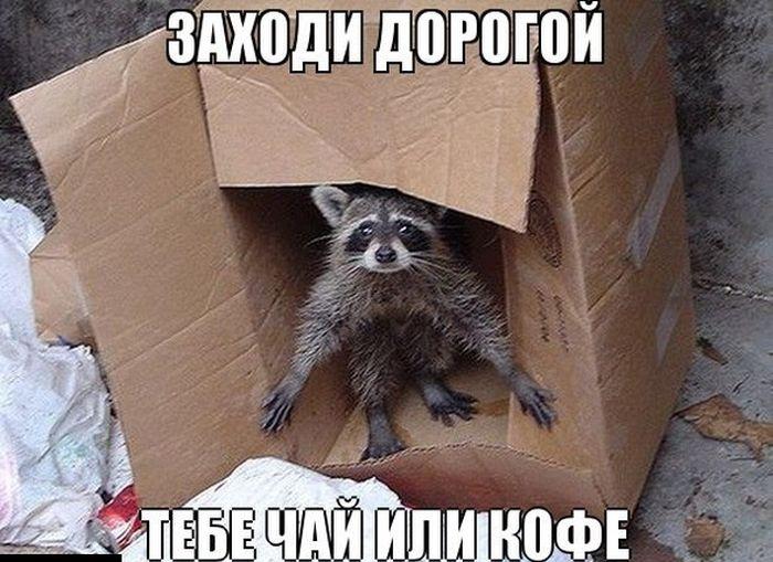 1354093735_podb_03 (700x509, 200Kb)