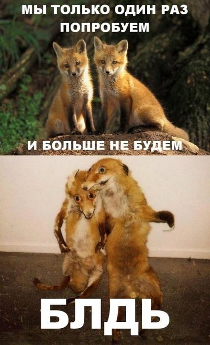 1357522945_bugagashenki-48 (426x700, 216Kb)