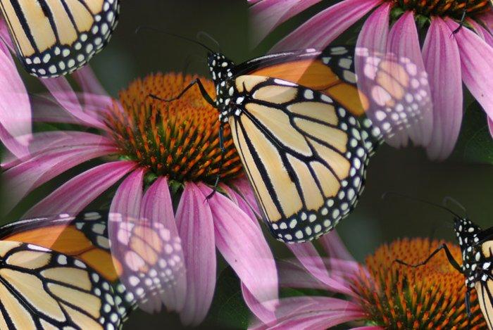 Название: Бабочка
