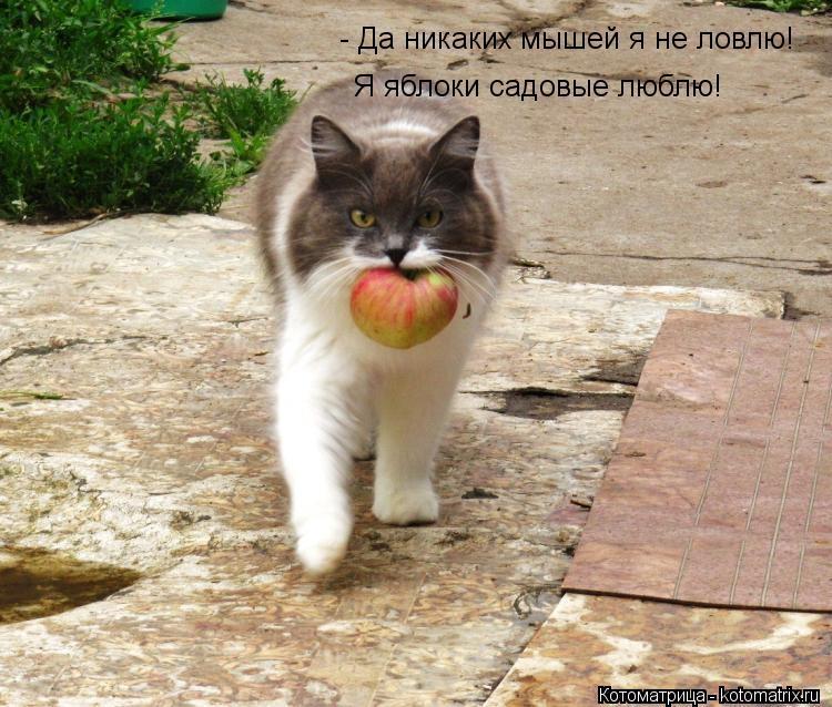 http://img0.liveinternet.ru/images/attach/b/4/103/111/103111370_large_kotomatritsa_3y.jpg