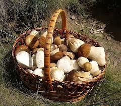 грибы белые (240x210, 15Kb)
