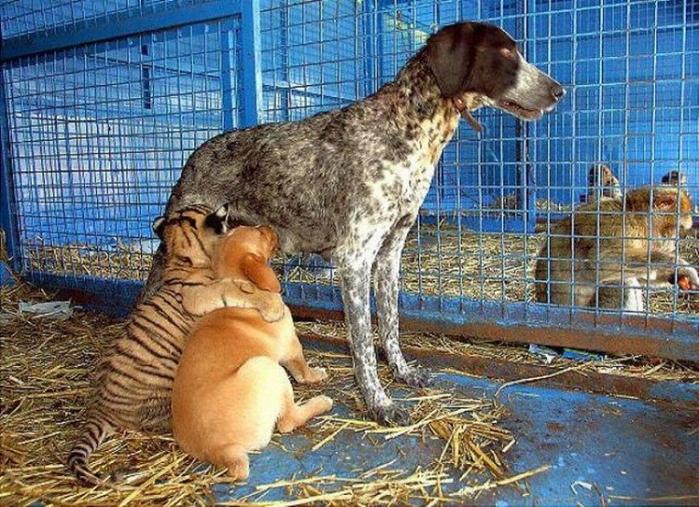 дружба животных (700x507, 349Kb)
