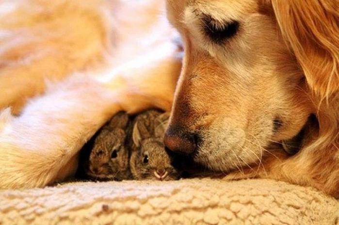дружба животных3 (700x464, 217Kb)
