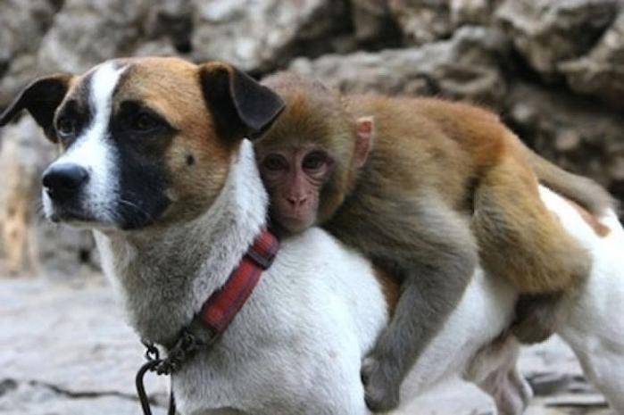 дружба животных6 (700x465, 189Kb)