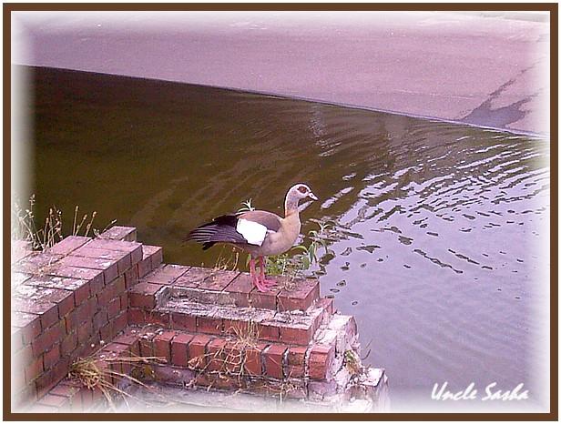 foto-0067.07.13.2 (616x466, 108Kb)