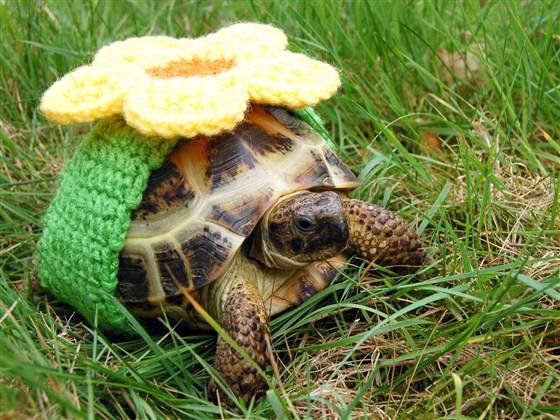 черепаха фото (560x420, 300Kb)