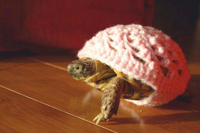 черепаха фото 6 (680x451, 206Kb)