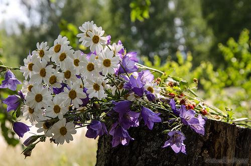 Полевой букет, полевые цветы, ромашки