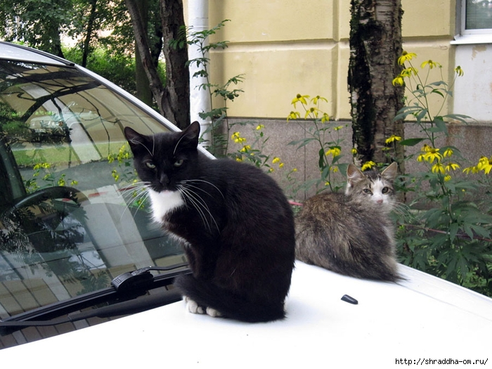 Питерские котики (2) (700x525, 286Kb)