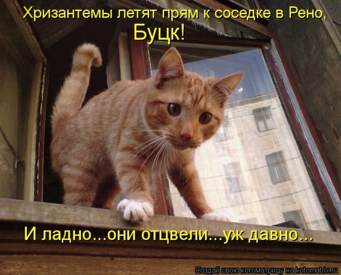 1374323503_kotomatrix_10_1 (700x564, 216Kb)