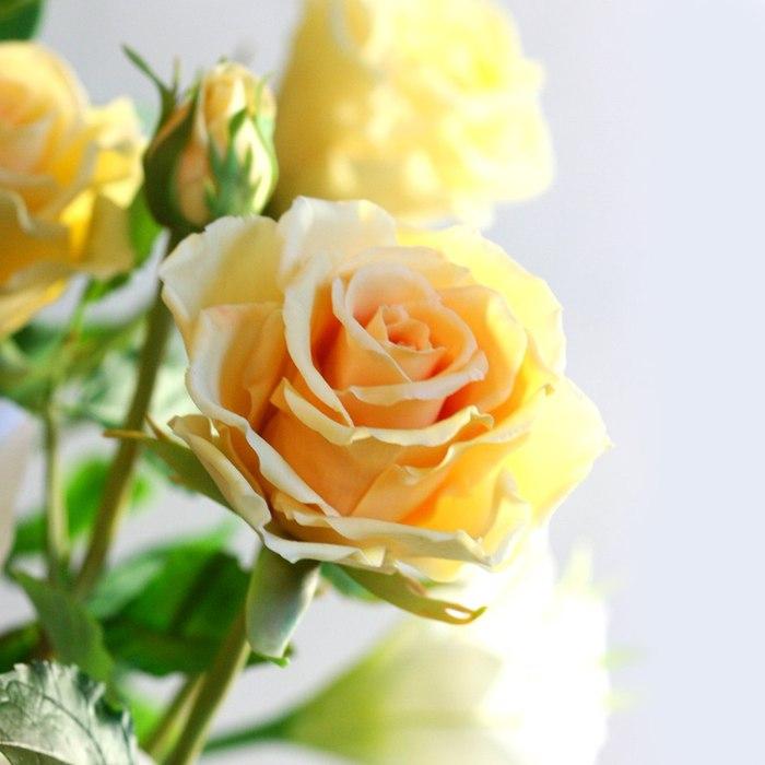 roza_2 (700x700, 55Kb)