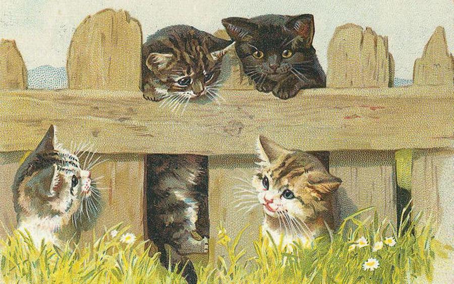 Фото для декупажа кошки