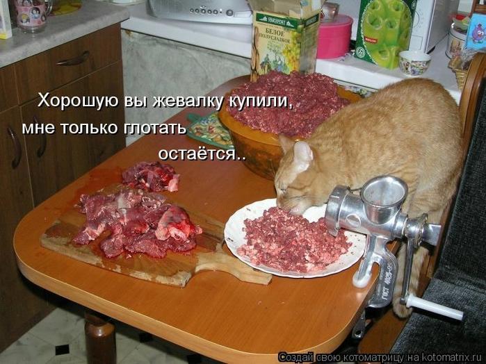 kotomatritsa__y (700x524, 291Kb)