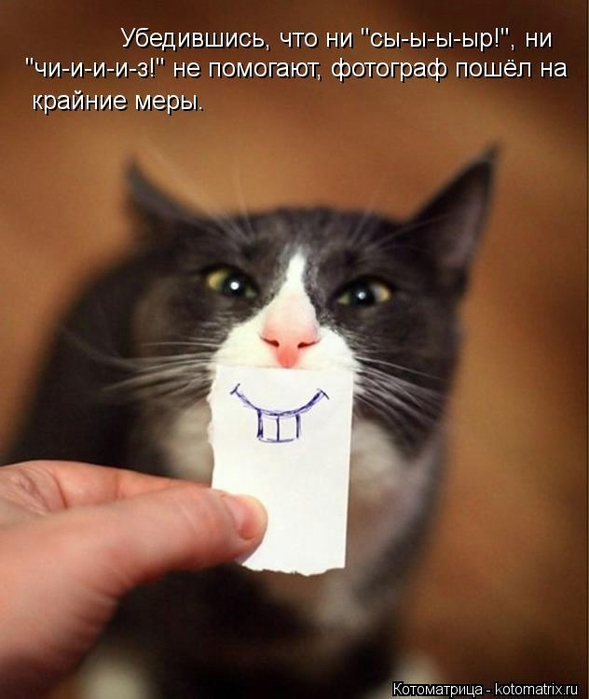 kotomatritsa_Hp (589x700, 200Kb)