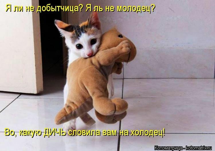Приколы почему, бесплатные фото, обои ...: pictures11.ru/prikoly-pochemu.html