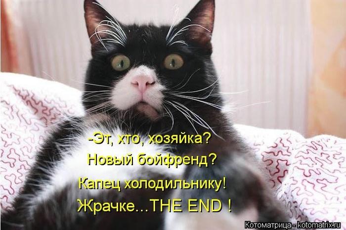 kotomatritsa_Zc (700x465, 219Kb)