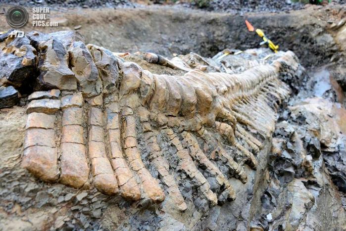 кости динозавра фото 1 (700x467, 314Kb)