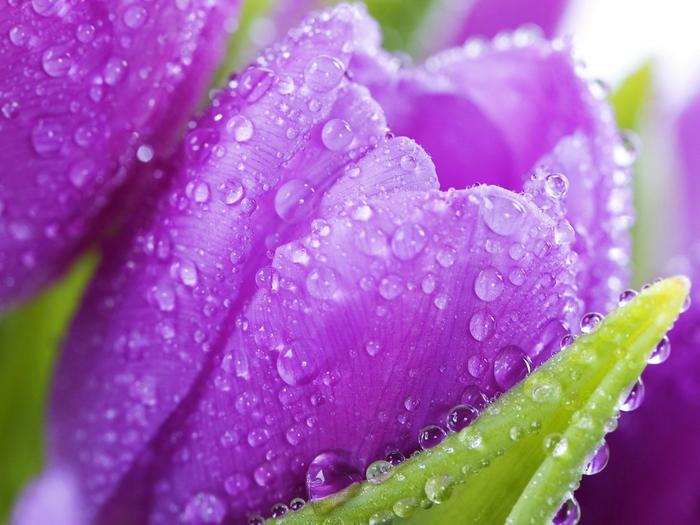 цветок 2 (700x525, 376Kb)