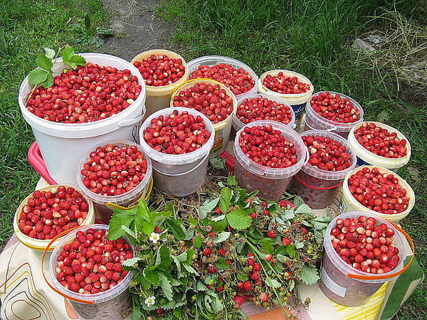 0_c3918_7c6b7543_XL (600x450, 522Kb)Целебные и полезные летние ягоды!