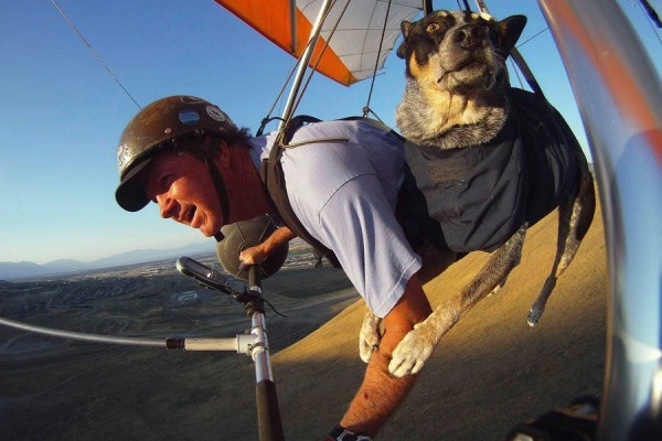 шэдоу пес дельтапланерист фото 1 (600x400, 121Kb)