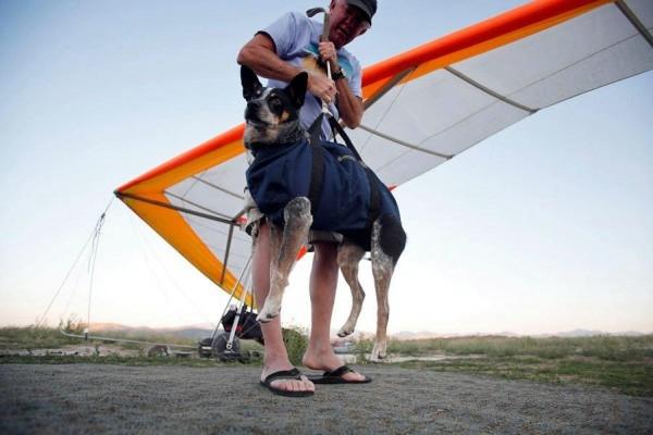 шэдоу пес дельтапланерист фото 5 (600x400, 102Kb)