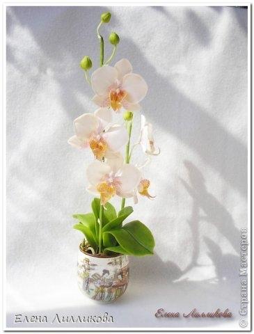 Керамическая флористика. Видео по лепке орхидеи из полимерной глины (2) (365x480, 71Kb)