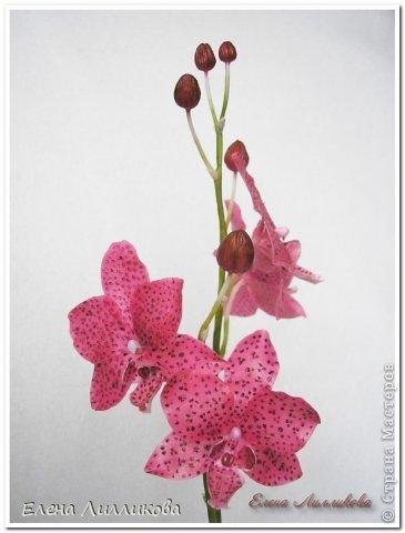 Керамическая флористика. Видео по лепке орхидеи из полимерной глины (6) (365x480, 70Kb)