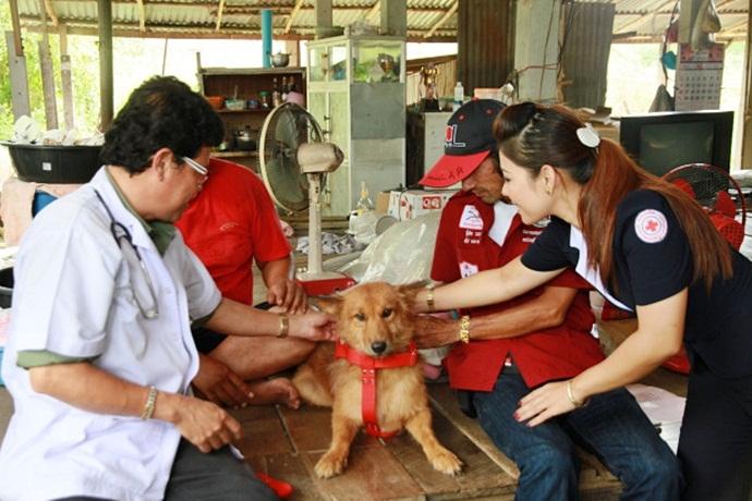 В Таиланде собака спасла (690x460, 222Kb)