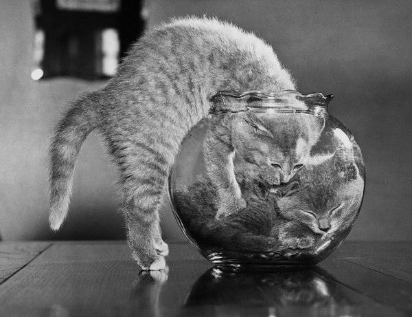 смешные фото кошек (600x461, 121Kb)