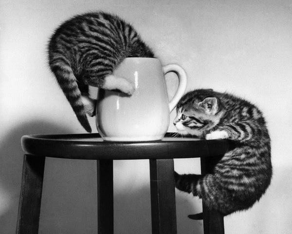 смешные фото кошек 1 (600x482, 95Kb)