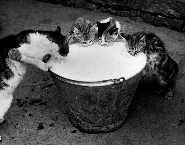 смешные фото кошек 3 (600x470, 137Kb)
