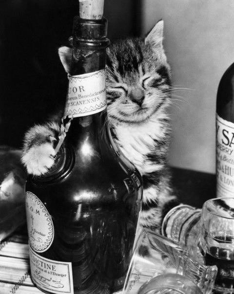 смешные фото кошек 5 (480x604, 116Kb)