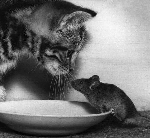 смешные фото кошек 9 (600x554, 121Kb)