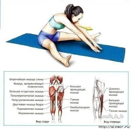 Упражнения на растяжку (451x443, 92Kb)
