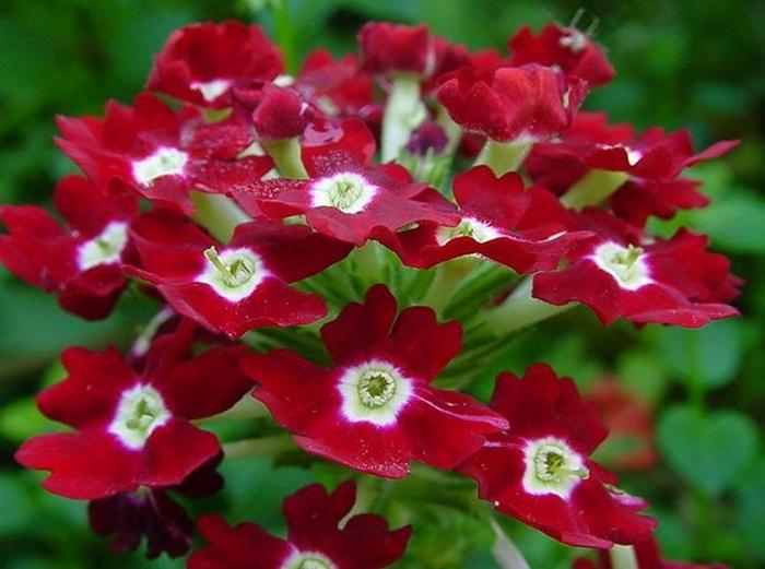 фото домашних цветов с названиями ...: dkls.pp.ua/?p=26430