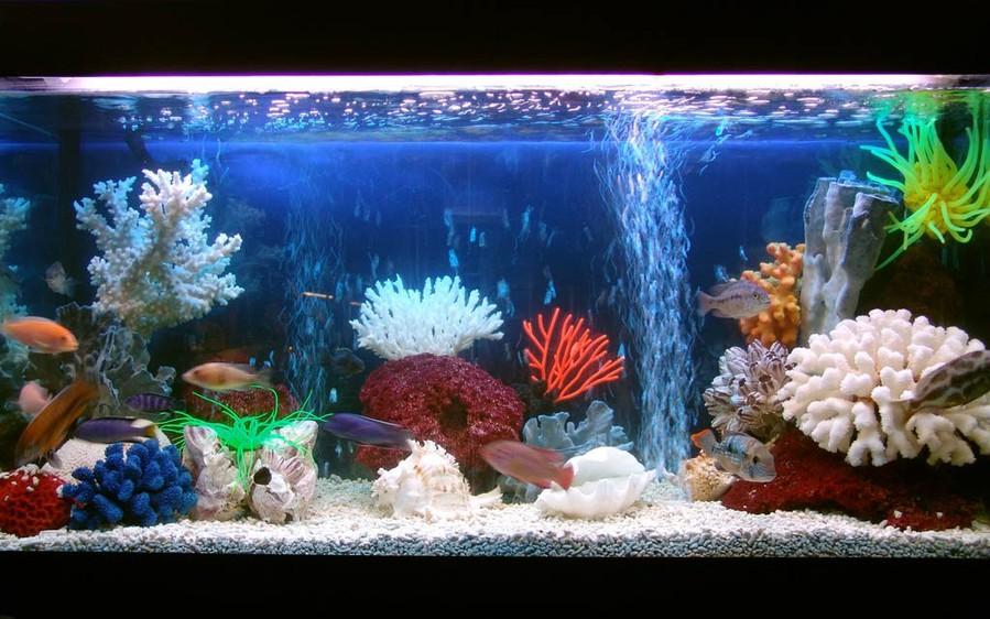 Заставку аквариум живой