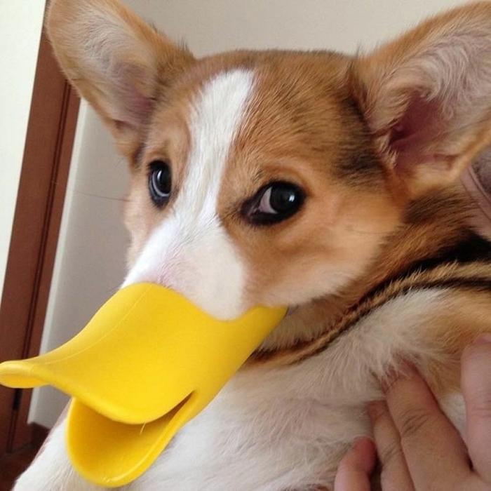 пес по кличке десмонд фото 2 (700x700, 268Kb)