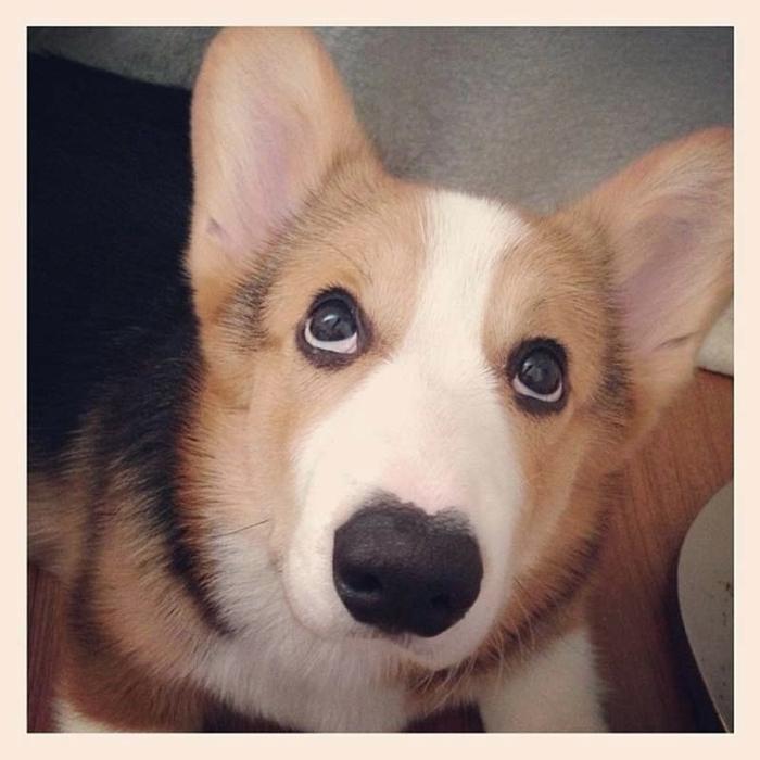 пес по кличке десмонд фото 4 (700x700, 235Kb)