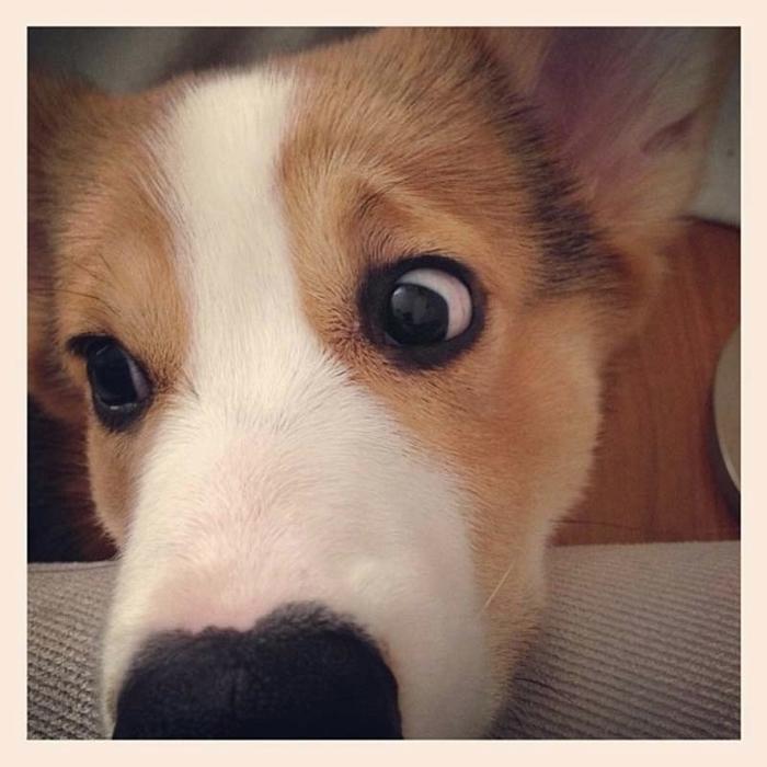 пес по кличке десмонд фото 8 (700x700, 241Kb)
