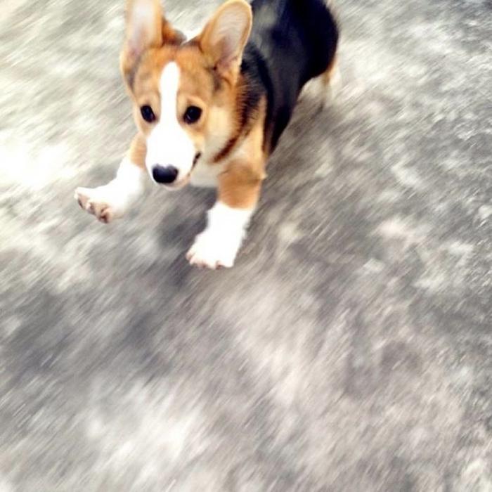 пес по кличке десмонд фото 9 (700x700, 260Kb)