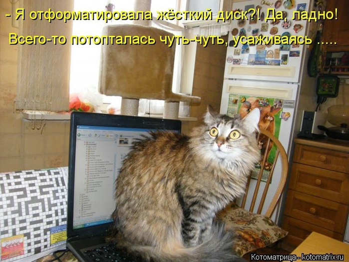 kotomatritsa_DV (700x524, 291Kb)