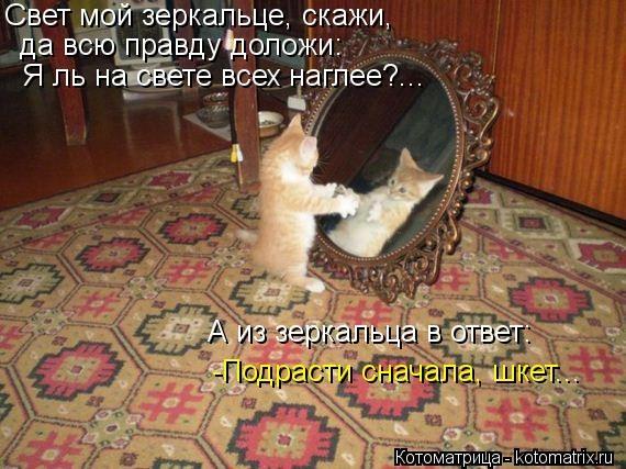 kotomatritsa_2N (570x427, 158Kb)